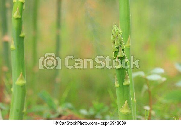 asparagus - csp46943009