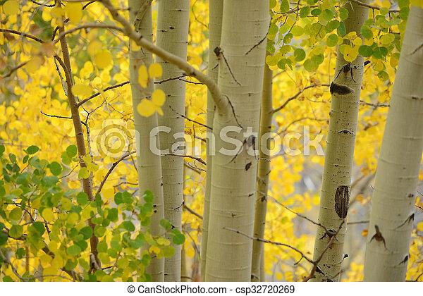 aspen autumn - csp32720269