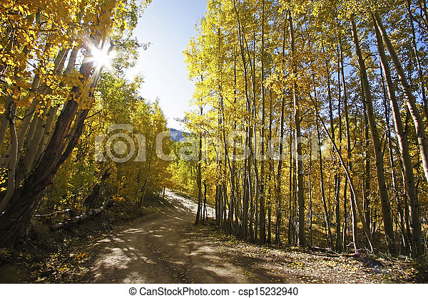 Aspen forest in a fall, Colorado - csp15232940