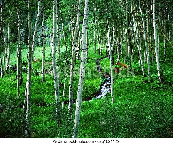 Aspen Grove and Ranch, Maroon Bells Wilderness Area, Colorado - csp1821179