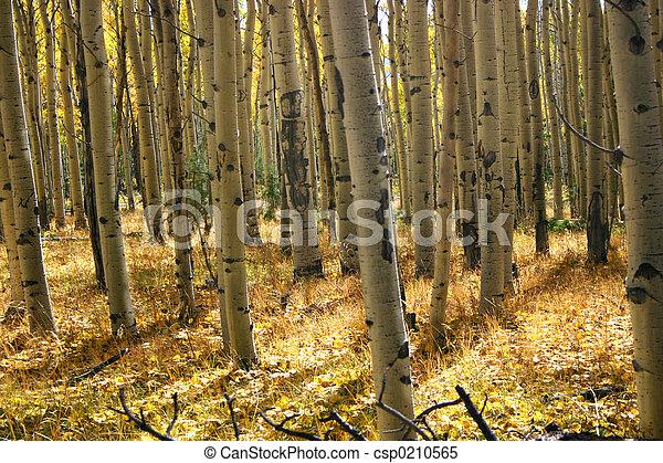 Aspen Grove - csp0210565