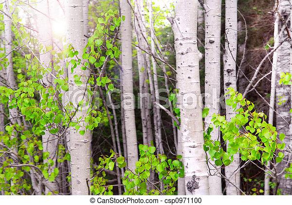 Aspen grove - csp0971100