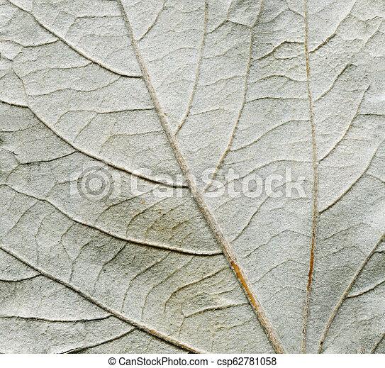 Aspen leave backside texture. Minimal autumn concept - csp62781058