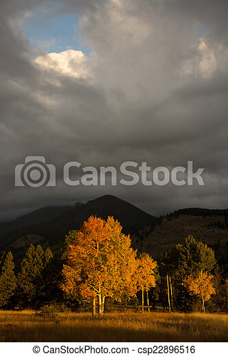 Aspen tree and clouds - csp22896516