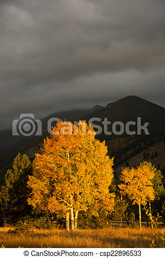 Aspen tree and clouds - csp22896533