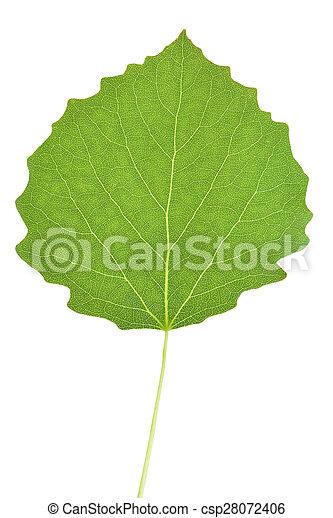 Aspen tree leaf - csp28072406