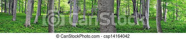 aspen trees in park - csp14164042