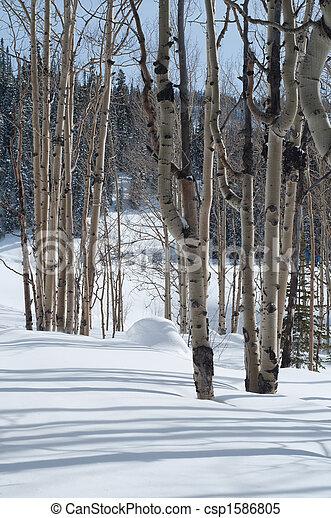 Aspen Woods - csp1586805