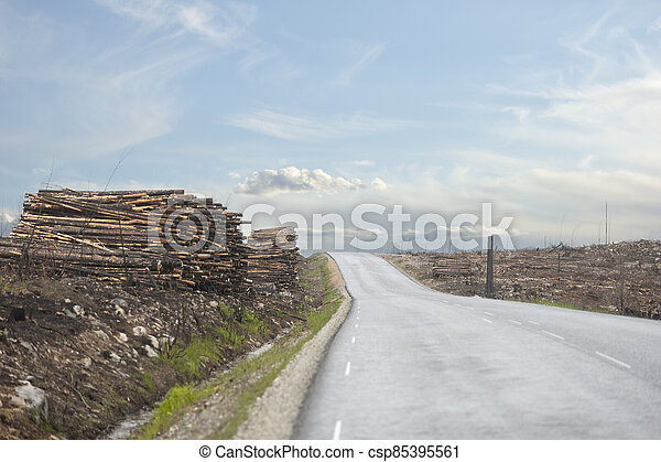 Asphalt road in clearing after forest fire - csp85395561