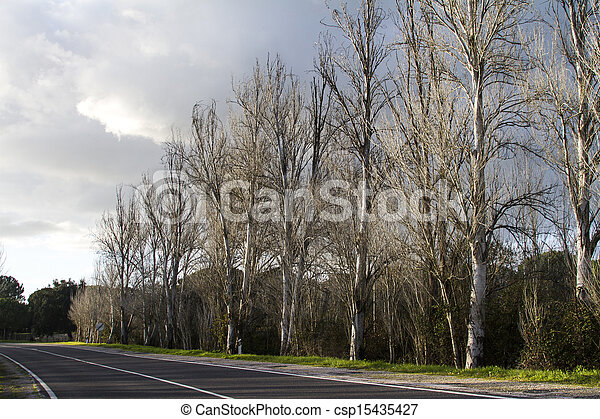 asphalt road with tall leafless trees - csp15435427