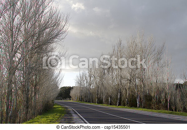 asphalt road with tall leafless trees - csp15435501