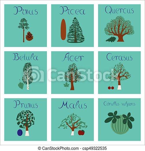 assembly of flat Illustrations Pinus Picea Quercus Betula Citrullus Malus Prunus Cerasus Citrullus Populus - csp49322535