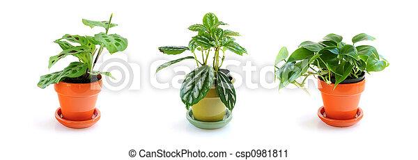 Assorted houseplants - csp0981811