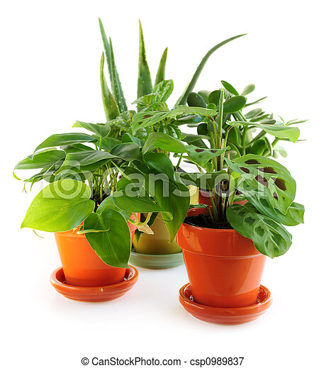 Assorted houseplants - csp0989837