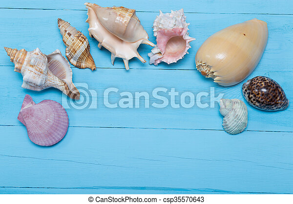 stock photo of assorted seashells on blue wooden background flat