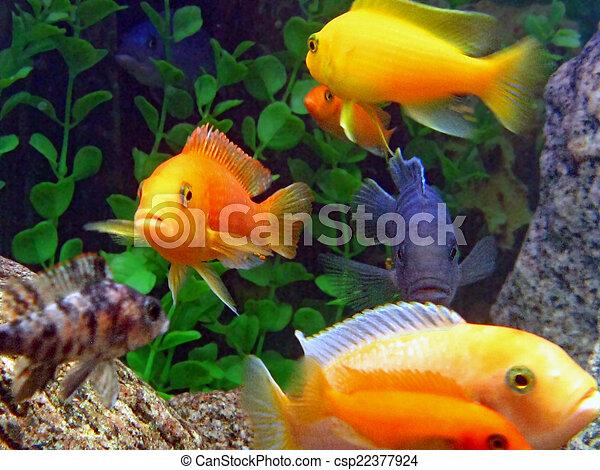 assortment of fish in an aquarium - csp22377924