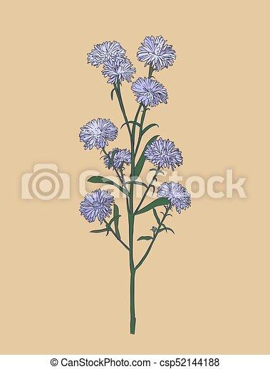 Aster Flower Sketch Vector Aster Flower Small Purple Flower