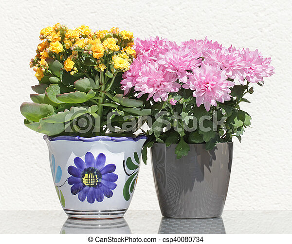 Asters And Kalanchoe Flowers Yellow Potted Kalanchoe And Pink