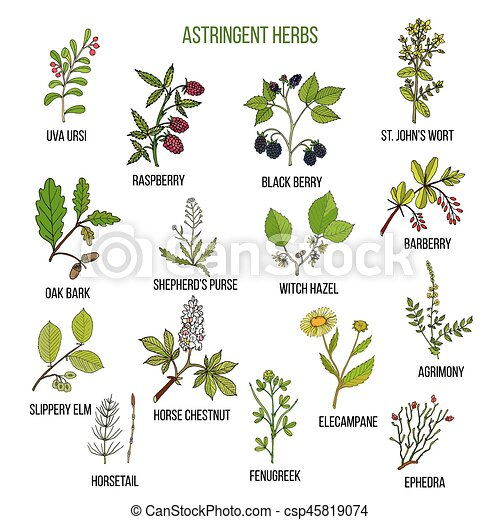Astringent herbs. Hand drawn set of medicinal plants - csp45819074