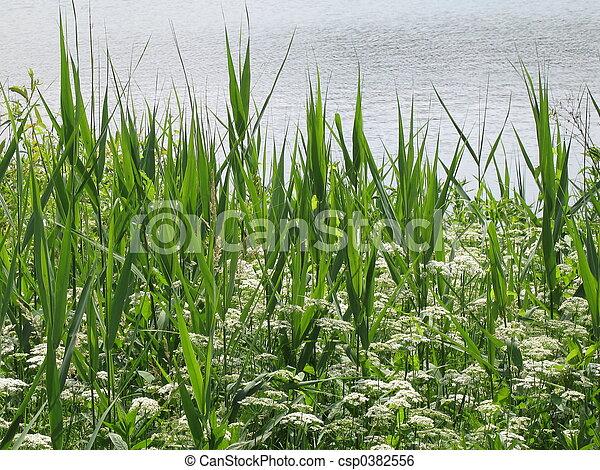 at the lake - csp0382556