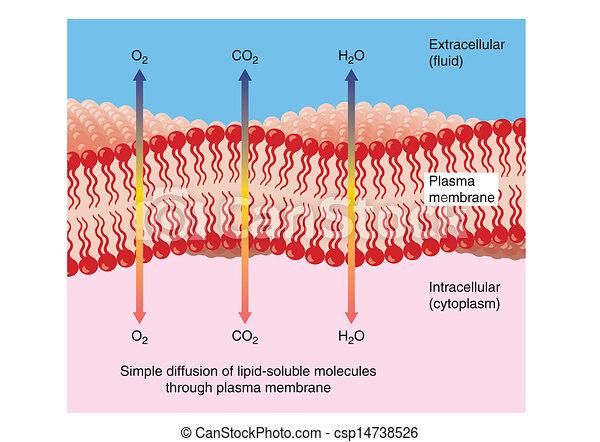 através, difusão, plasma, membrana - csp14738526
