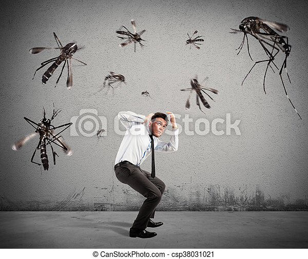 attaque, moustiques - csp38031021