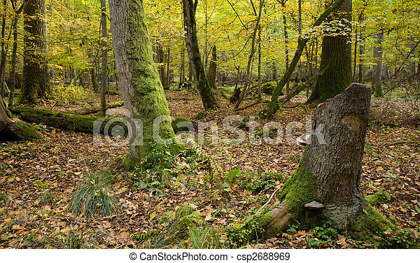 Atumnal landscape of deciduous stand - csp2688969