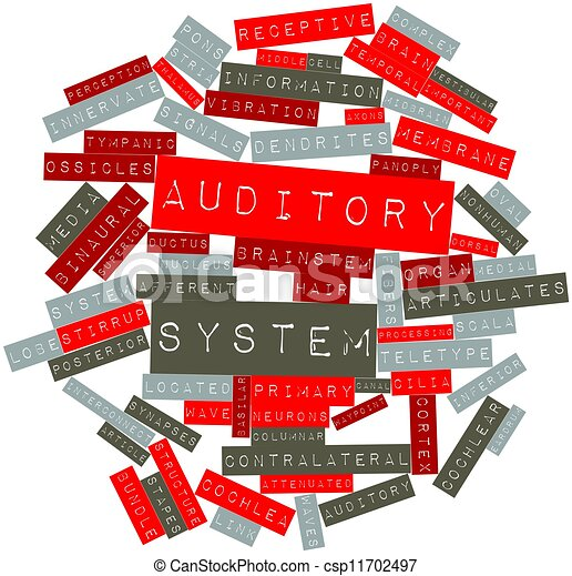 Auditory system - csp11702497