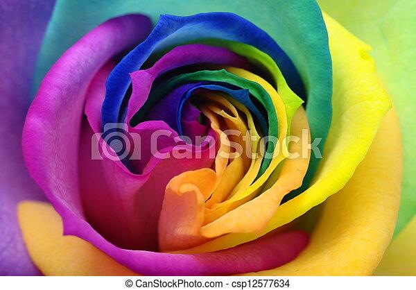 auf, herz, rose, schließen, regenbogen - csp12577634