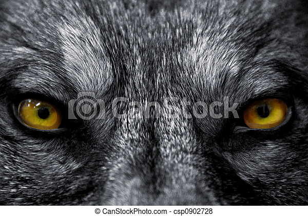 augenpaar, wolf - csp0902728