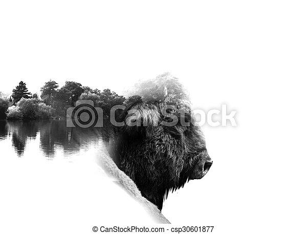 auroch in low key monochrome portrait. Double exposure effect - csp30601877
