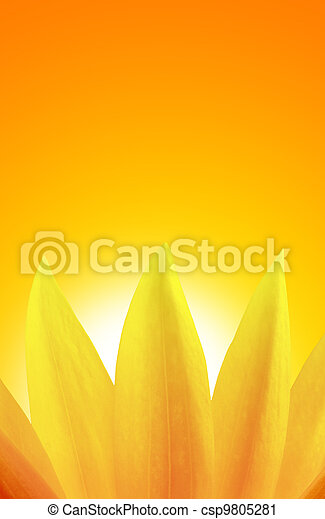 aus, sonnenuntergang, sonnenblume - csp9805281