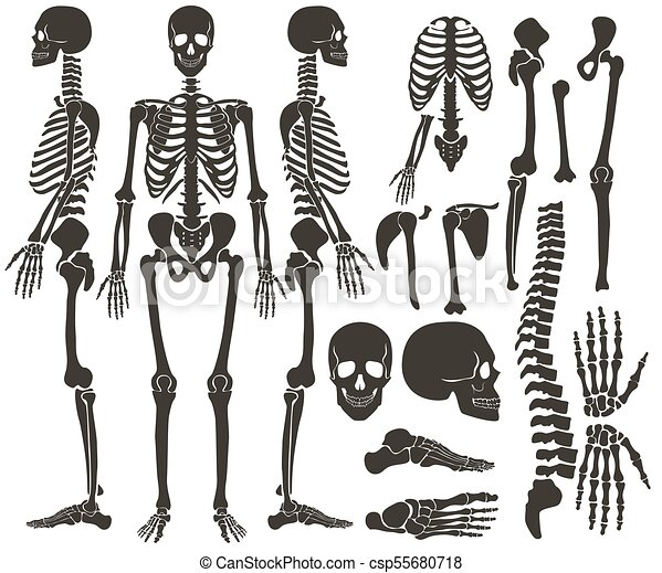 Ausführlich, dunkel, satz, silhouette, skelett, collection., hoch ...