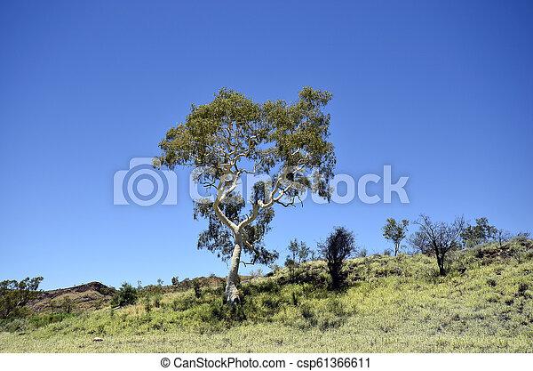 australia, botanik - csp61366611
