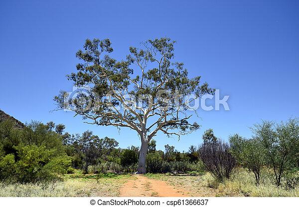 australia, botanik - csp61366637
