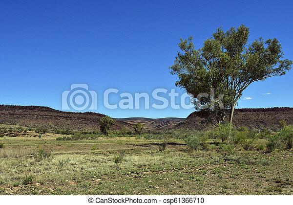 australia, gebiet, bereich, nördlich , mcdonnell - csp61366710