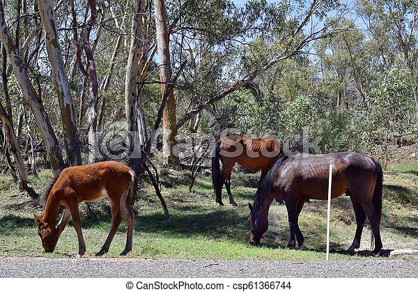 australia, gebiet, bereich, nördlich , mcdonnell - csp61366744