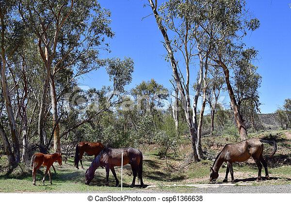 australia, gebiet, bereich, nördlich , mcdonnell - csp61366638