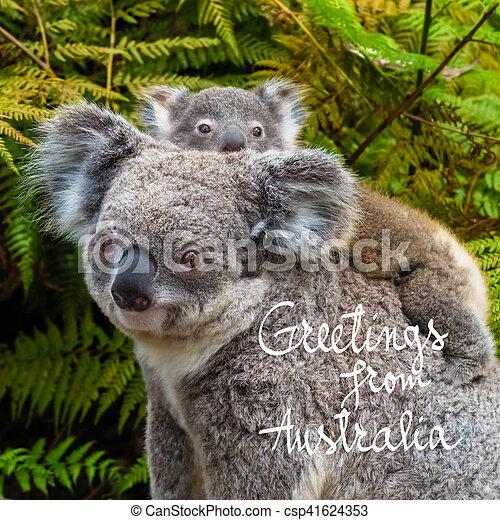 Australian koala bear native animal with baby and greetings from australian koala bear native animal with baby and greetings from australia text csp41624353 m4hsunfo