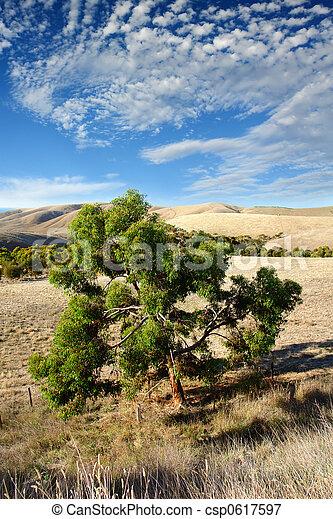 Australian Landscape - csp0617597