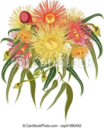 Australian Native Flowers Vector Vector Illustration Of