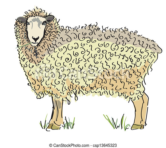 Australian sheep Vector - csp13645323
