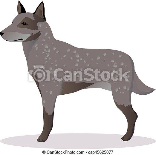 australian shepherd dog vector illustration vectors illustration rh canstockphoto com dog vector free dog vector artwork
