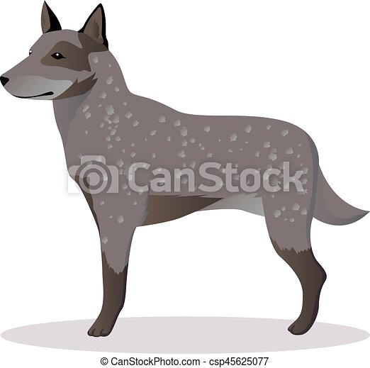 australian shepherd dog vector illustration vectors illustration rh canstockphoto com dog bone vector art dog vector free pic