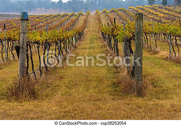 Australian vineyard in winter - csp38253054