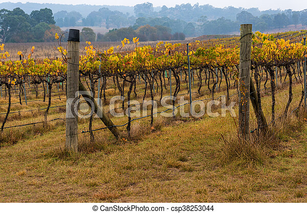 Australian vineyard in winter - csp38253044