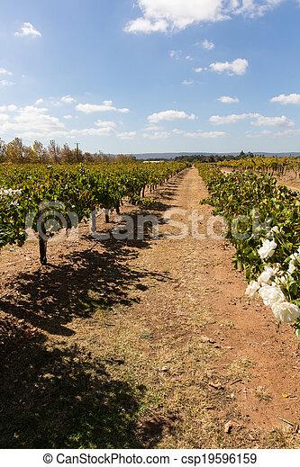 Australian vineyard - csp19596159