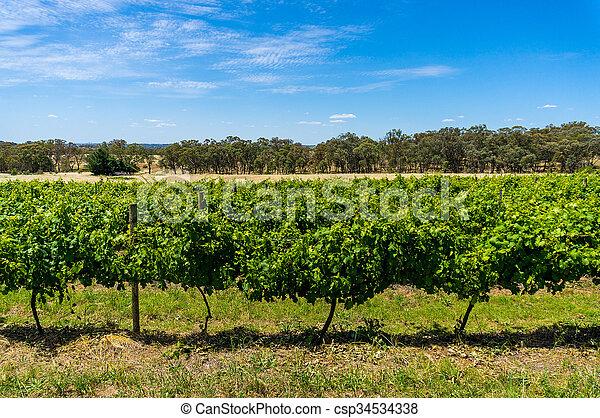Australian vineyard with rural nature background - csp34534338