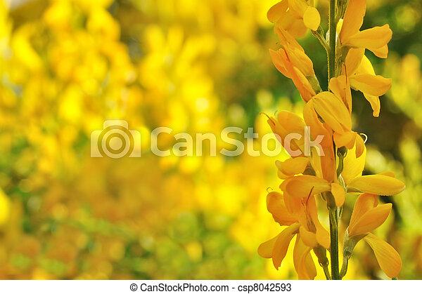 Australian wattle background yellow flowers on australian wattle australian wattle background csp8042593 mightylinksfo