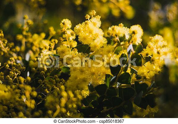 australien, arrière-cour, indigène, extérieur, ensoleillé, canisse, plante - csp85018367